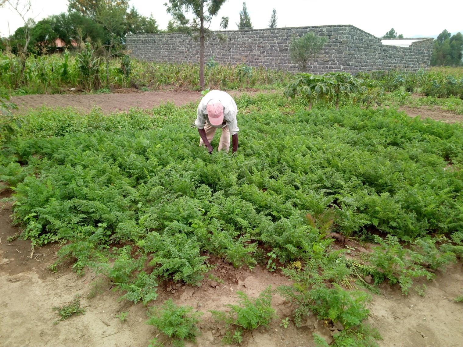 Garden of Curtis (Mbaruk near Laikipia University)