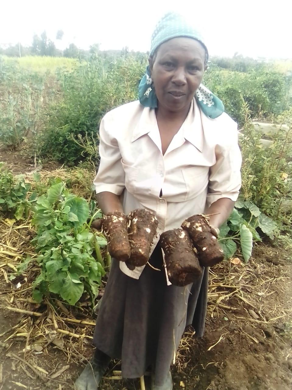 Garden of Mama Wanjohi