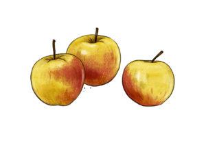 Äpfel Weltacker