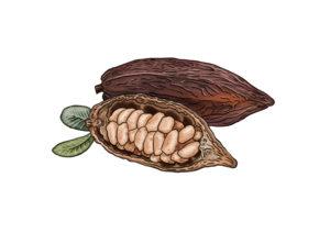 Kakao Weltacker