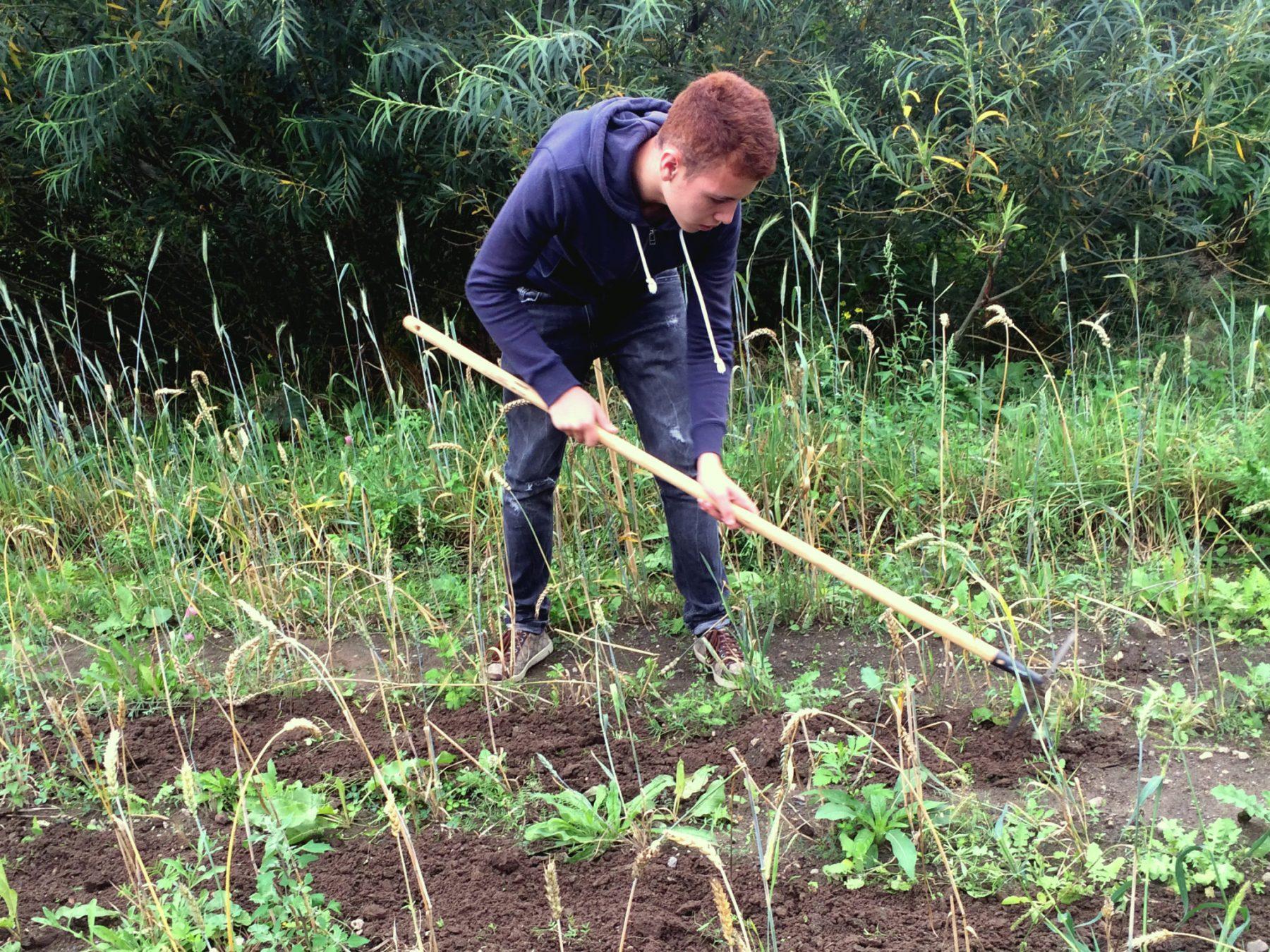 Auch das Weizenfeld wurde durchgeharkt.