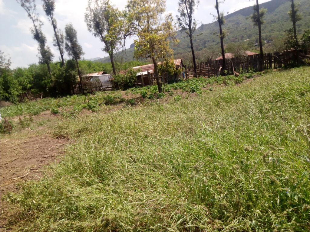 2000 m² Kenia