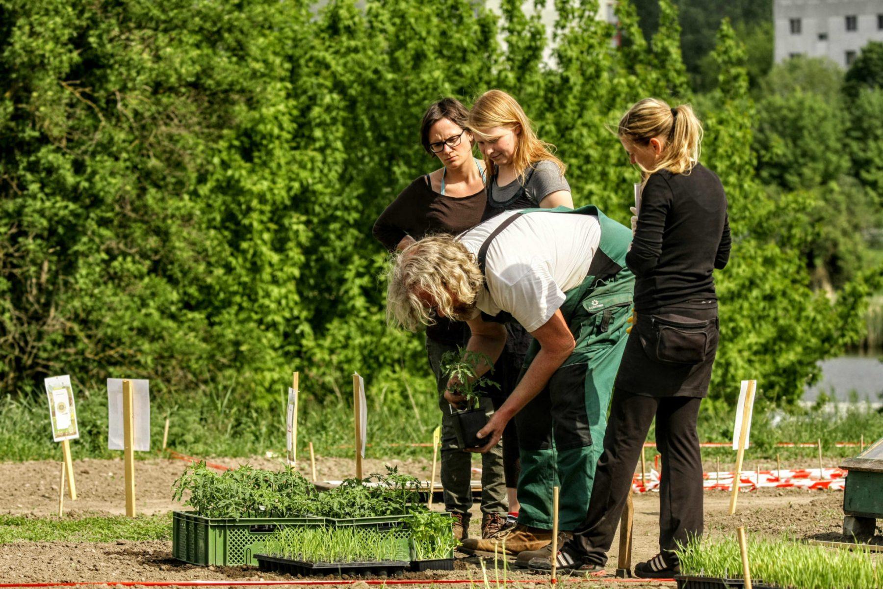 Jungpflanzen begutachten und dann geht's raus auf dem Weltacker. Foto: Volker Gehrmann
