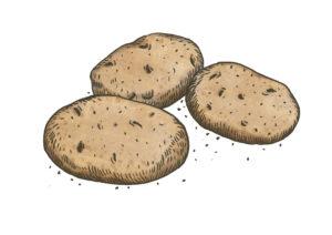 Kartoffeln Weltacker