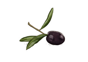Oliven Weltacker