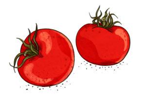 Tomaten Weltacker
