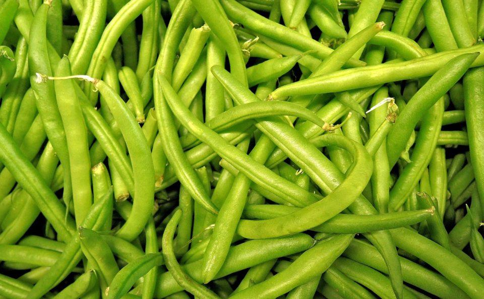 Gartenbohnen