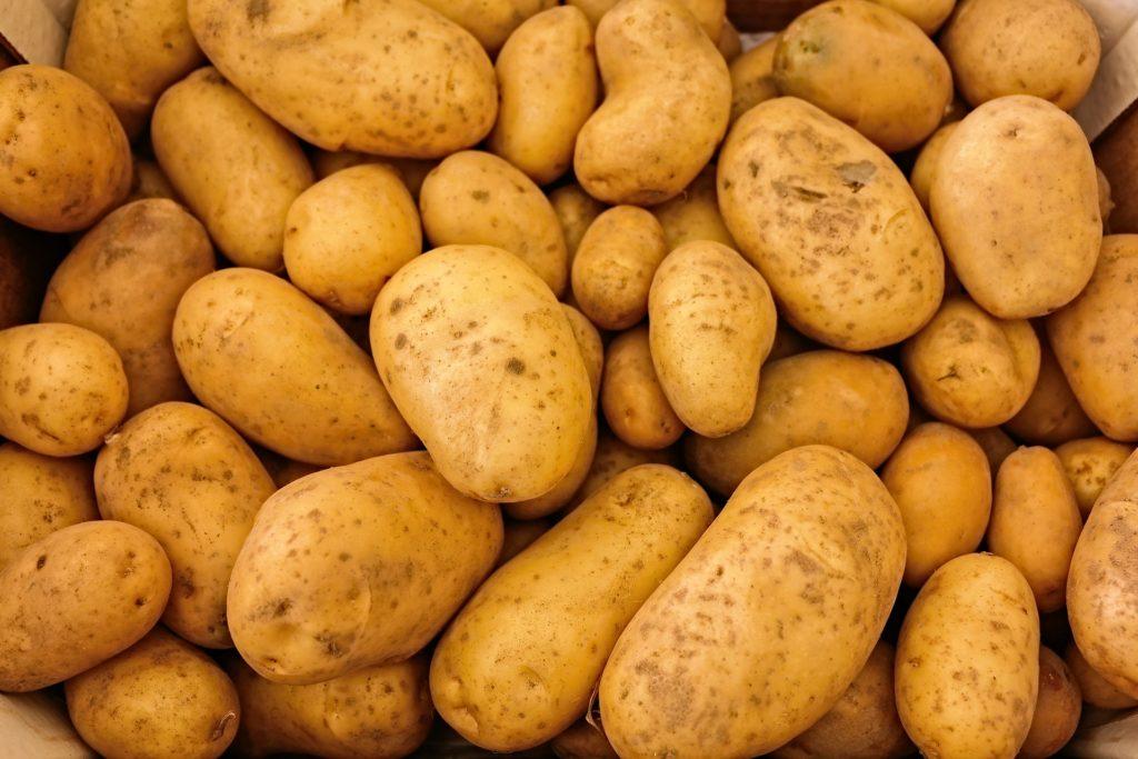 Kartoffel Weltacker